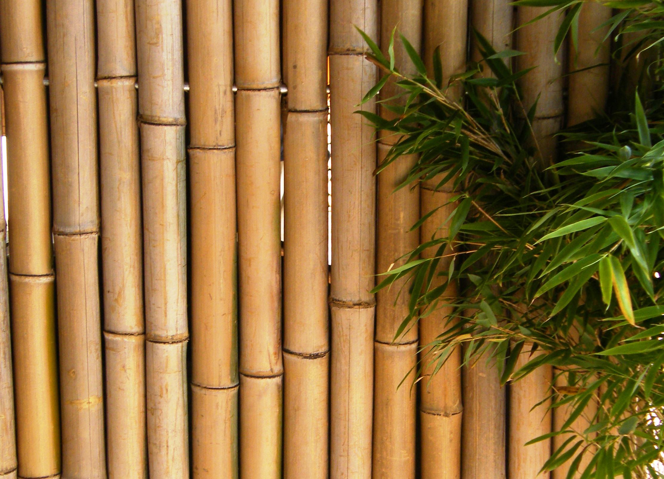 Bambuselement Bambooline 180 X 150 Cm Www Garten Bronder Shop Com