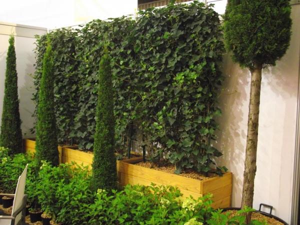 bepflanzter heckentrog efeu m ebay. Black Bedroom Furniture Sets. Home Design Ideas