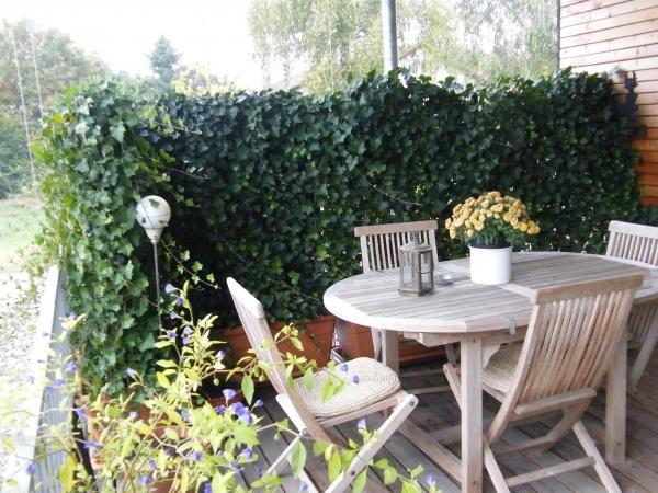 bepflanzter trog mit efeu hecke 1 50m hoch. Black Bedroom Furniture Sets. Home Design Ideas